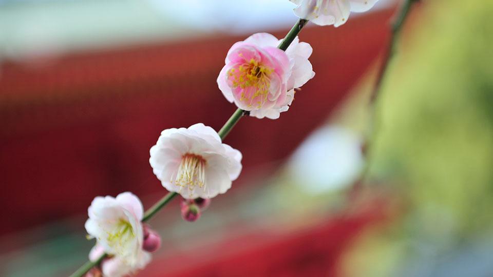写真:庭のうぐいすイメージ
