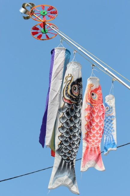 鯉のぼり-S